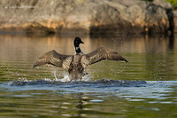 Photo - Plongeon huard